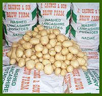 Nadine POTATOES are a second early, producing high yields of uniform attractive tubers, especially at maturity. They have a  good resistance to bruising, common scab skin spot and potato virus Y. Resistant to potato cystnematode Ro1 and partial resistance to Pa2/3. They have a low dry matter contentwith firm cooking texture, and a good boiling quality. Wiyh no after cooking discouloring