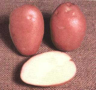 Stoma potatoes